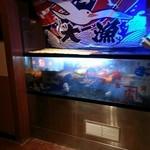 魚菜 日本橋亭 - お刺身が美味しいということで、お店に入ると大きな水槽がありました!