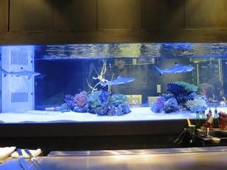 鉄板DINING集 栄店 - サメが回遊する4mの巨大水槽