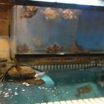 30402484 - 私の座ったカウンターは目の前に生簀と水槽があって獲れたての魚たちが泳いでました。