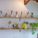コチト - 店内には植物がかわいらしくディスプレイされている。