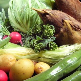 淡路産の野菜をご用意!ステーキや粉もんに合う季節野菜!
