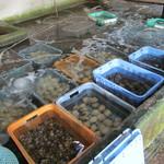 新島水産 - 内観写真:さまざまな魚介類が販売されている