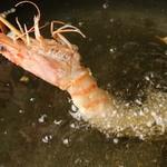 秋葉原漁港 快海 - 有頭海老の魚天串