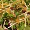 ビストロ アンジェ - 料理写真:サラダ