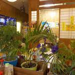まんぷく食堂 - 小上がりは個室風の造り。飾られている緑も、どこか南国仕様
