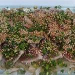 魚よし - 鰹のたたき