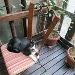 cafe 泉 - 猫ちゃんは人馴れしていますよ♪
