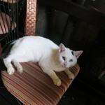 cafe 泉 - もう1匹白い猫ちゃんもいました♪カメラ目線♪