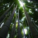 休耕庵 竹の庭の茶席 - 報国寺の竹林