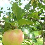 山本観光果樹園 - りんご!