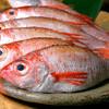 Shimaneya - 料理写真:のどぐろ ピチピチの鮮魚です!
