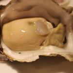 横浜馬車道 旬の肉料理イタリアン オステリア・アウストロ - 岩かき