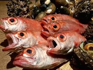 個室居酒屋 呑蔵 - 高級魚のどぐろ