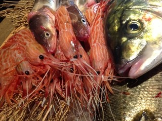 個室居酒屋 呑蔵 - 新鮮朝穫れ魚