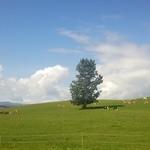 31025951 - なだらかな牧草地が広がっています。