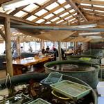 海鮮料理 日南水産 - 店内も水槽があります。むしろ水槽間にテーブルが置かれているといった方が正しい。