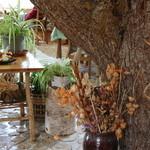 森のキッチン かわい -