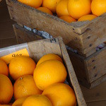 立川まんがぱーく - 生絞り用オレンジ