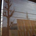 旬鮮だいにんぐ天狗藤が丘駅前店 - 大きな窓には簾がかかっていました
