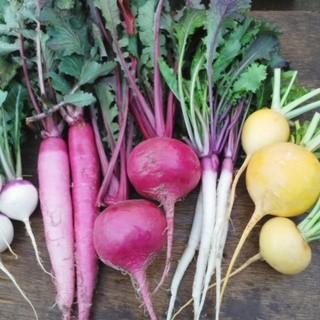 契約農家からの新鮮な野菜!