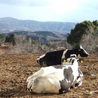 静岡県大美伊豆牧場の低温殺菌牛乳