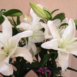 お宿 木の葉 - ☆2014初秋☆素敵な花