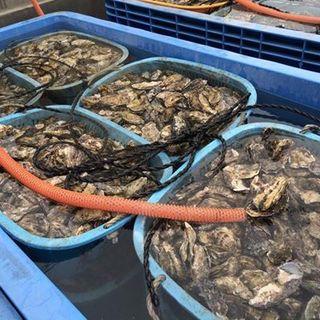 一年中新鮮な宮城の和牡蠣を提供いたします。