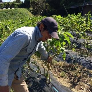 野菜やトラキの無農薬有機栽培で育った野菜を使用。
