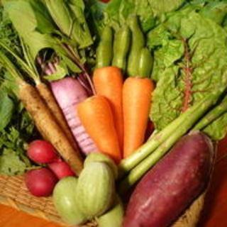 農園から直送の朝採り有機野菜。
