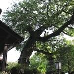 たねや日牟禮茶屋 - 大木☆