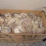 31638762 - 鮑、ホタテ、牡蠣の殻が木箱に!