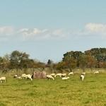 31682279 - 羊たち~ 2014.10.