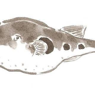 冬季限定最高級魚とらふぐ料理