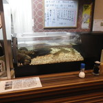 第二昌丸 - 貝・海老用生け簀