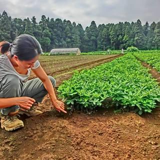 オーガニック農法ビオディナミ