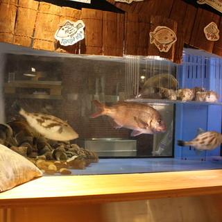 鯛やオマールエビが泳ぐカウンターの水槽