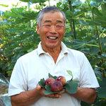 カーディナル 川崎製菓工場 - 甘くて大きな無花果。地元農家の方と提携し、新鮮で美味しい健康的な素材を使用しております。