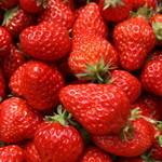 軽井沢ガーデンファームいちご園 - 料理写真:完熟のいちご達!甘さが違います。