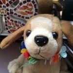 ハワイアンダイニングHAUOLI - 犬