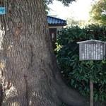珈琲館 くすの樹 - 巨木楠木の由来