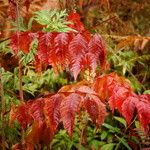 蕎麦 ふじおか - 飯綱山の山懐の紅葉