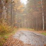 蕎麦 ふじおか - 微細な粒子と化した雨滴の濃密な湿り気が、森のしじまにまとわりついて一種厳かともいうべき神聖な雰囲気を醸し出している...