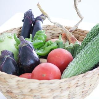 【安心】【安全】店主自らお野菜を自家栽培◎