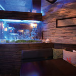 BLUE FISH AQUARIUM -