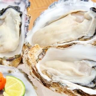 今週の選りすぐりの牡蠣