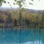 32333522 - 141017北海道 麦菓堂 青い池