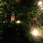 32353436 - 玄関へのアプローチと庭☻                       2014/11訪問^ ^