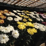 Yousukou - 菊の展覧会が催されていました