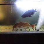 活魚料理 いか清 - 外にある水槽