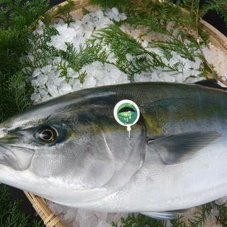 臼杵魚河岸の意地